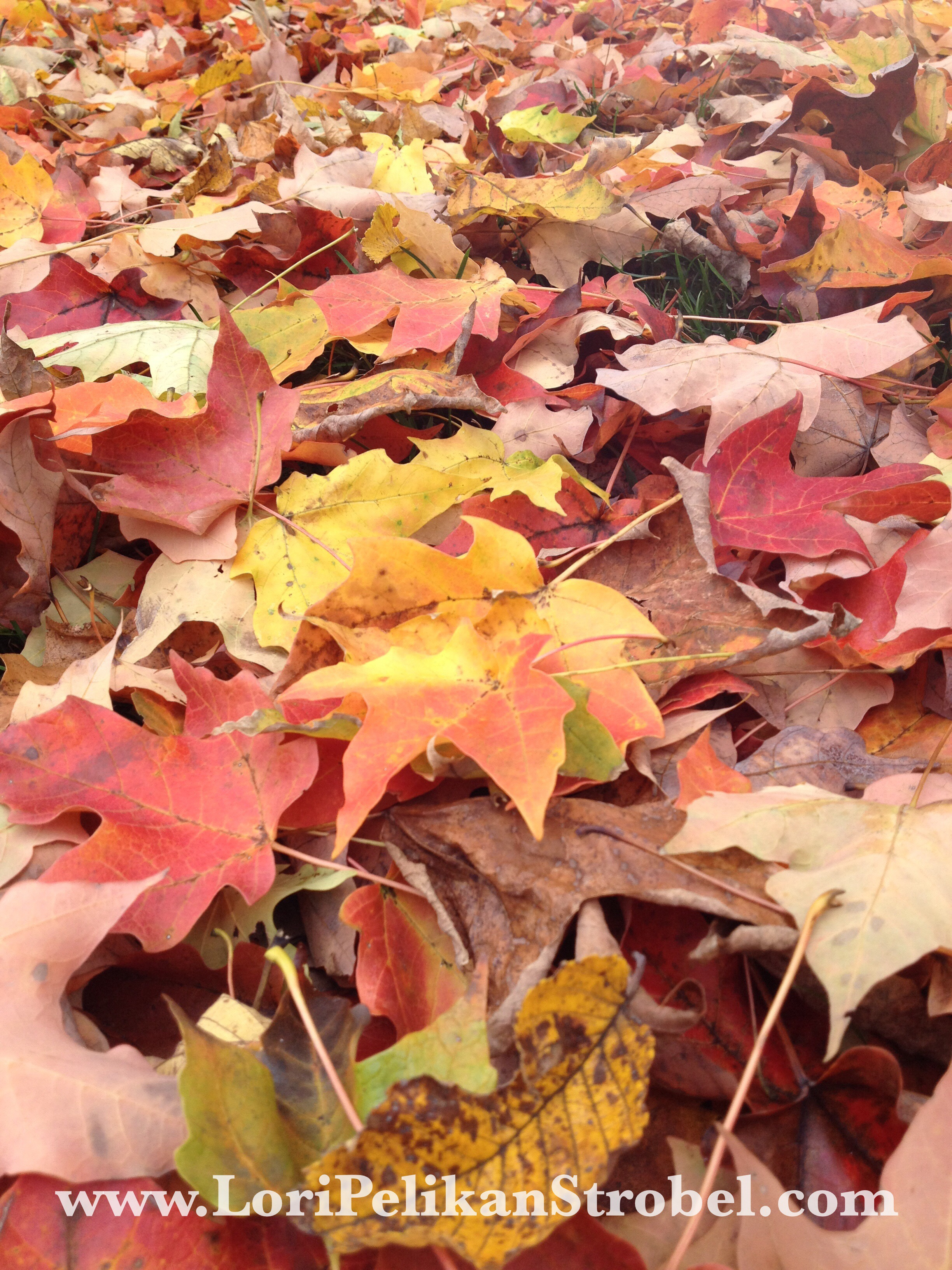 Autumn Breathes www.loripelikanstrobel.com