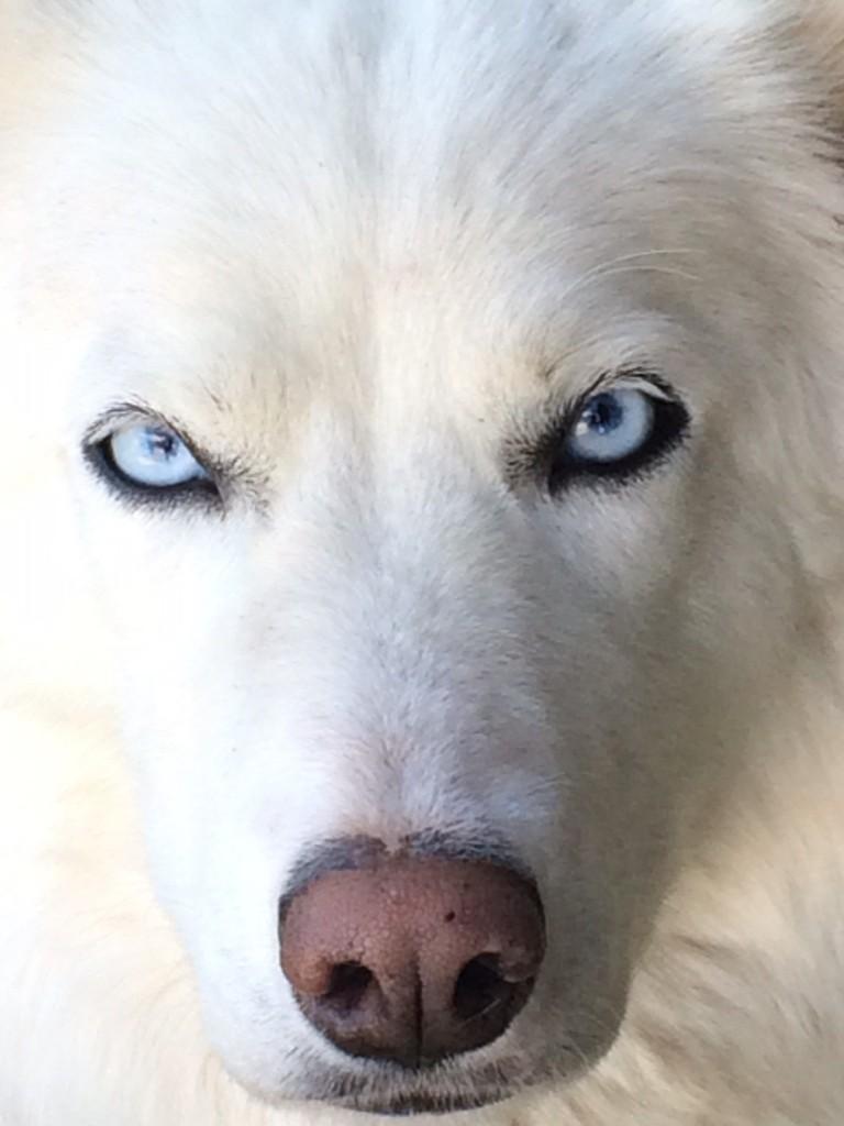 White Wolf-Aiyana