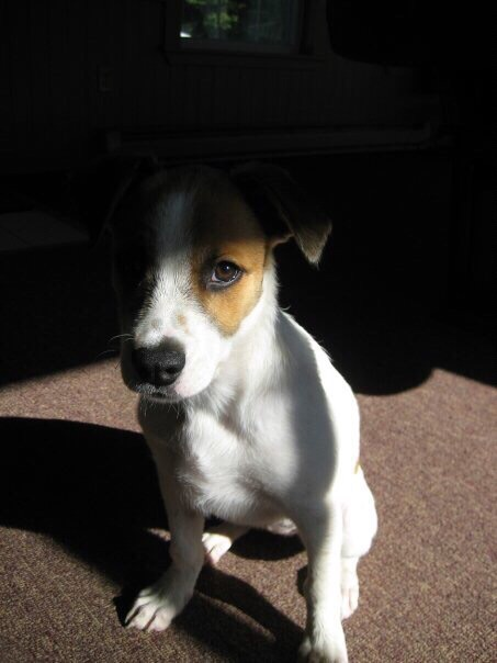 Maggie as a puppy