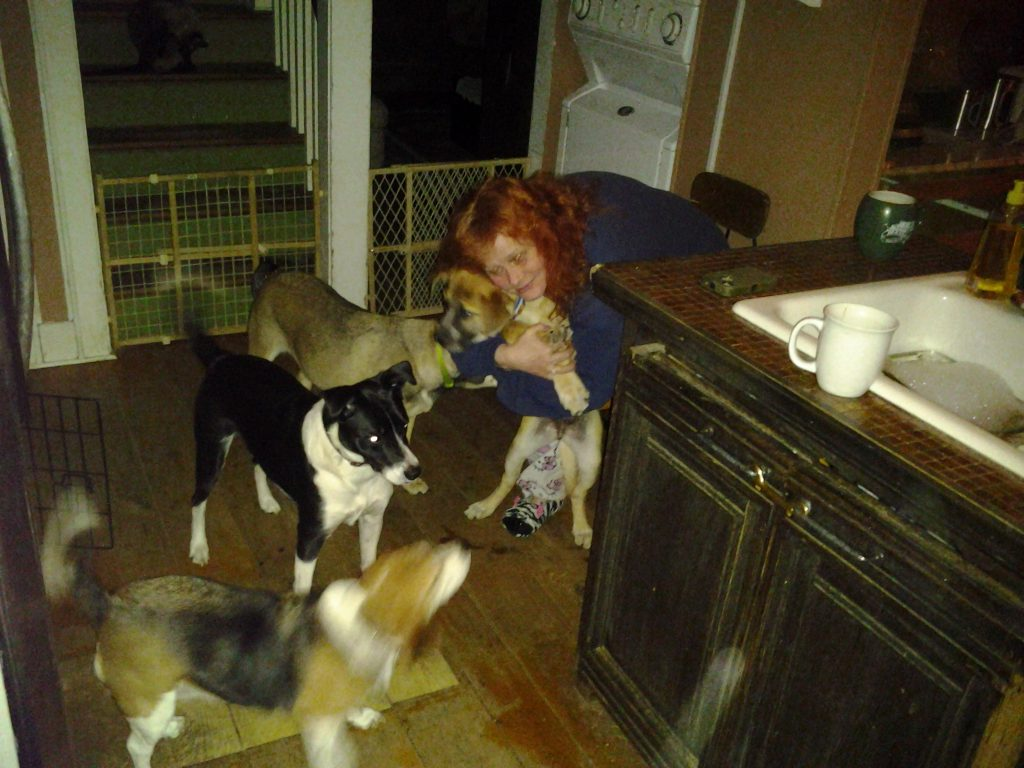 Cari and her dogs