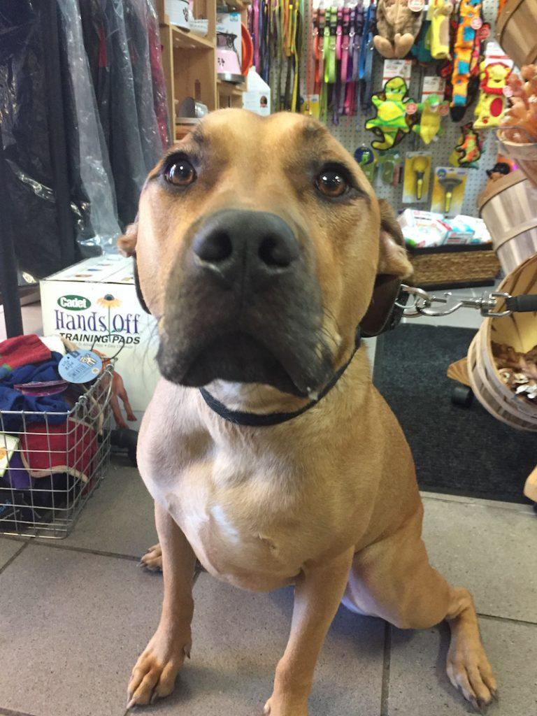 Meet Chubs! Dog on the Street Interview