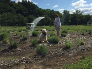 Waggleview® with Lavender Pond Farm owner, Denise Salafia